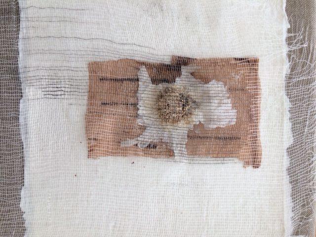 Georgous Garlic, Caroline Fitzgerald, element15
